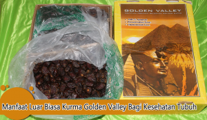 Jual Kurma Golden Valley Murah Jogja